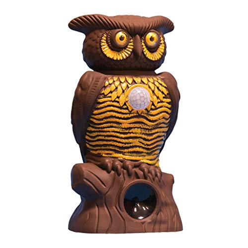As Seen On TV Owl Alert Owl Statue — Pesticide-Free Pest Control — Targets Outdoor Pests Like Racoons, Deer, Rabbits, Squirrels, & Mice — Plastic Owl Statue with Light-Up Eyes for Fence & Garden -  BulbHead, 12225-6