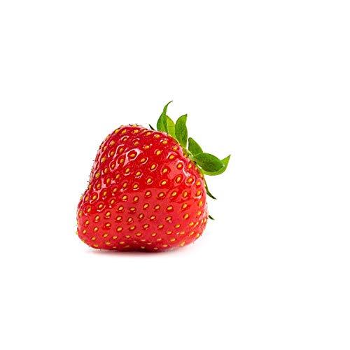 Erdbeerprofi - Erdbeere Sonata - 20 Erdbeerpflanzen - Junitragend - Erdbeersetzlinge - Erdbeergrünpflanzen (Pflanzzeit: August - September)