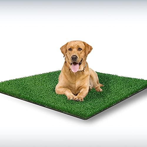 best dog pee pads grass