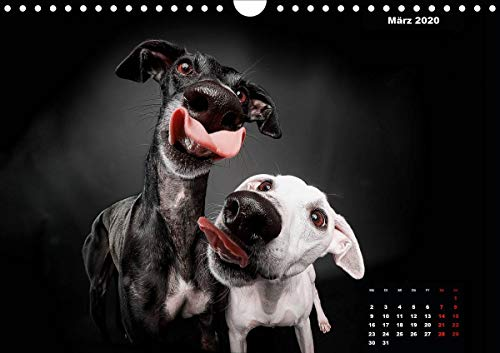 『Gier, M: Stimme der Windhunde (Wandkalender 2020 DIN A4 quer』の4枚目の画像