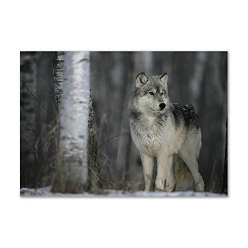 Tulup Quadro su Vetro Immagine 100x70cm Artistica Stampa Pared Decoración - Lobo gris