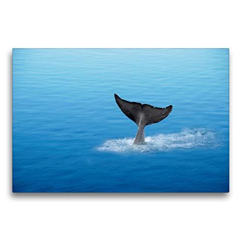 CALVENDO Premium Textil-Leinwand 75 x 50 cm Quer-Format Die Welt der Meere, Leinwanddruck von Heike Hultsch