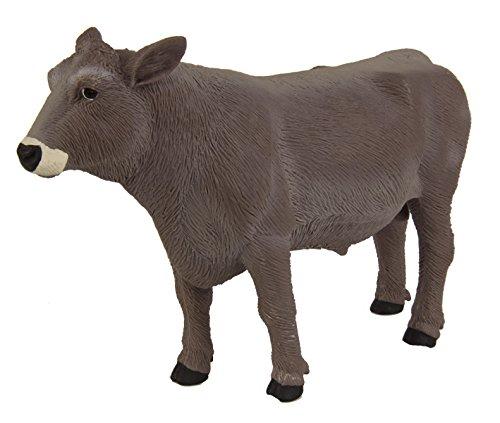 Safari Marron Swiss Bull