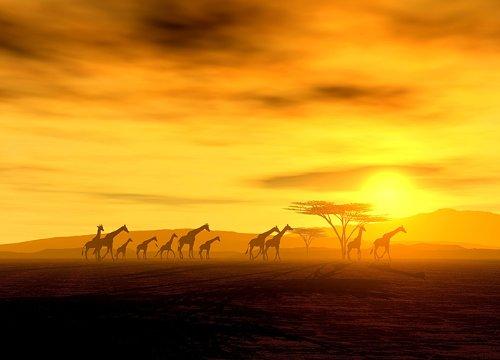 FotoTapete SAFARI Giraffen Familie CROSING AFFRICA Foto-Tapete (254 x 183 cm)