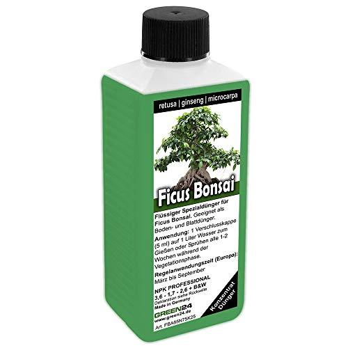Green24 -   Ficus Ginseng