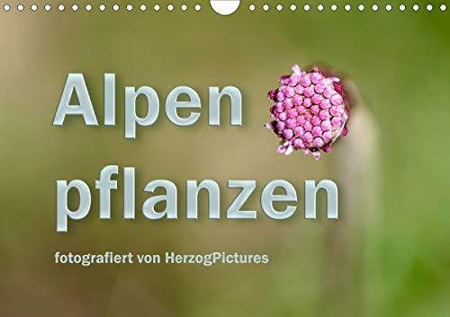 Alpenpflanzen fotografiert von HerzogPictures (Wandkalender 2021 DIN A4 quer)