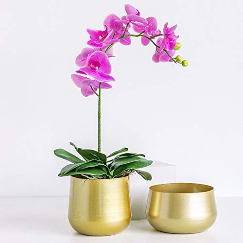 2 confezioni da 2 vasi in ottone dorato spazzolato vasi in metallo con foro di drenaggio, vasi rotondi antiruggine per piante e fiori, contenitori per piante e fiori