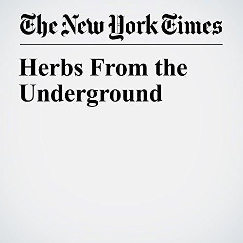 Herbs From the Underground copertina