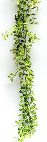 Mühlenbeckia slinger wijnslinger groen 180 cm bladerslinger draadstruiken decoratieve slinger tafeldecoratie communie vormsel kerkdecoratie huwelijk ceremonie