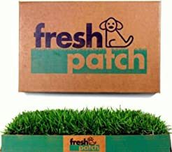 hydroponic grass for dogs