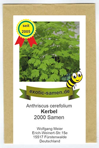 Kerbel - Bienenweide - Anthriscus cerefolium - 2000 Samen