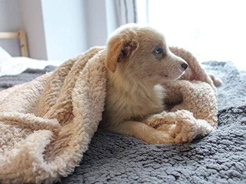 "furrybaby Premium Fluffy Fleece Dog Blanket, Soft and Warm Pet Throw for Dogs & Cats (Medium (3240""), Beige Blanket)"
