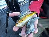 Big Bass on Ingenious Bait- Lake Piru