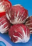 Salerno Seeds Red Round Chicory Radicchio Cicoria Rossa Di Chioggia 7 Grams Made in Italy Italian Non-GMO