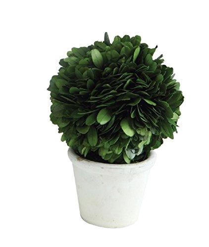 Creative Co-Op Tontopf Buchsbaum-Formschnitt aus Buchsbaum, Grün