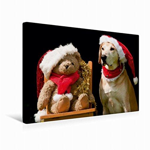 Calvendo Premium Textil-Leinwand 45 cm x 30 cm quer, Frohe Weihnachten! | Wandbild, Bild auf Keilrahmen, Fertigbild auf echter Leinwand, Leinwanddruck: Azawakh-Ridgeback mit Teddy Tiere Tiere