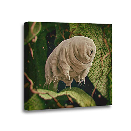 Ansouyi 12x12 Inches Canvas Wall Art Painting Tardigrada Tardigrade Water Bear 3D Rendered Moss Microscope Biology Home Decorative Artwork Prints