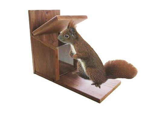 HG - Eichhörnchen