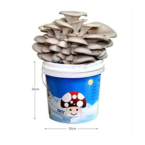 Rowe Cultive su Propio Kit de Hongos, DIY Oyster Mushroom Spawn Compost, Kits de Inicio de Semillas de champiñones Mycelium, Cosecha en 2-3 semanas (Size : Tremella)