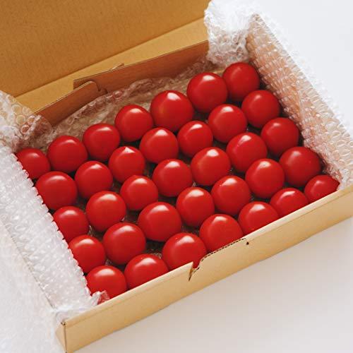 リコペルおもいろトマト『プレミアムトマトおもいろトマト1箱(約1.0kg)』