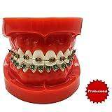 Dental ortodoncia Demostración Modelo - dientes dentales estudiar la enseñanza Modelo - Dientes Typodont Modelo con soportes Mental - Simulación Ortodoncia modelo de los dientes con ligadura Lazos,S
