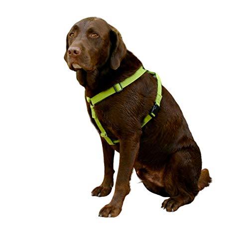 Basic Canvas Dog Harness (1