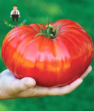 50 - Heirloom Big Rainbow Tomate Bonsai-Frucht-Gemüse für Heim & Garten