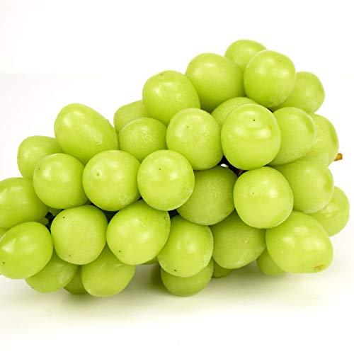 国華園 長野産 ご家庭用 シャインマスカット 約1.2kg ぶどう 葡萄