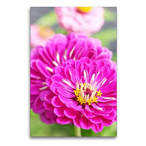Premium Textil-Leinwand 60 x 90 cm Hoch-Format Zwei pinke Zinnien | Wandbild, HD-Bild auf Keilrahmen, Fertigbild auf hochwertigem Vlies, Leinwanddruck von Gisela Kruse
