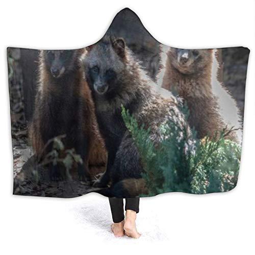 SUHETI Tragbare Hoodie Decke,Pelz Waschbär Säugetier Hund Nah schauende Tiere...