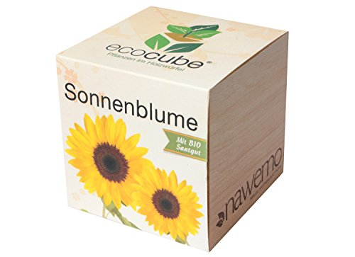 Ecocube Sonnenblume im Holzwürfel