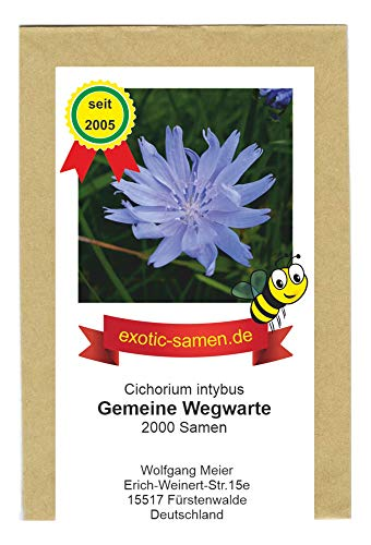 Gemeine Wegwarte - Bienenweide - Heilpflanze des Jahres 2020 - Cichorium intybus - 2000 Samen