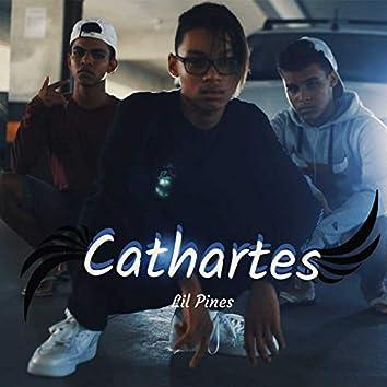 Cathartes