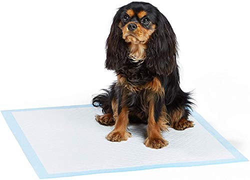 AmazonBasics Heavy Duty Regular Pet Dog and Puppy Training Pads - Pack of 80, 24 x 23 Inches