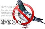 SpikeZone - Polycarbonate Bird Control Spikes, 11 Rft (Transparent) - Set of 10…