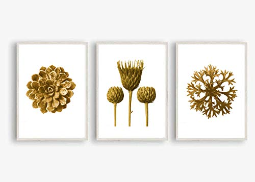 Kunstdruck Din A4 ungerahmt 3-teilig - Dachwurz Farn Sukkulente Distel Blatt Pflanze Natur Modern Sepia Druck Poster Bild