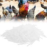 Shanrya Varilla para La Nariz del Gallo, Diseño Razonable Fácil De Limpiar Varilla para La Nariz del Gallo Exquisita Artesanía para El Hogar para La Tienda De Mascotas para Adornos para Mascotas