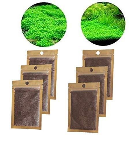 Suministros para acuarios semillas de plantas acuáticas semillas de plantas suministros para acuarios mini semillas 6 bolsas súper fáciles de cultivar 2 especies