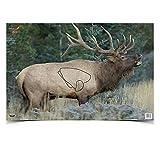 Birchwood Casey 37485 Eze-Scorer Elk Paper Target (2 Count), 23 x 35-Inch