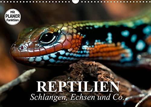 Reptilien. Schlangen, Echsen und Co. (Wandkalender 2022 DIN A3 quer)