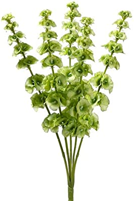 "21"" Bells of Ireland Bush x5 Light Green (Pack of 12)"