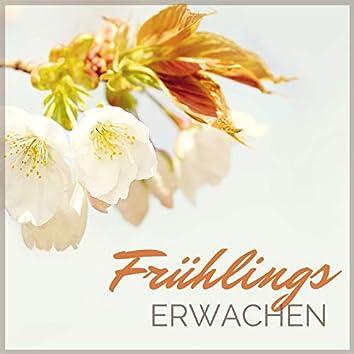 Frühlings Erwachen: Beruhigende Musik mit Naturgeräuschen zum Spirituelles Erwachen und Meditation