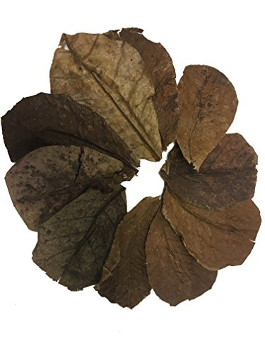 Awesome Aquatic Betta/Shrimp Leaves 10 4'-6' Premium Catappa Indian Almond Leaves Natural Habitat...
