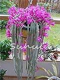 potseed 200pcs fiori in vaso semi epiphyllum balcone impianto per il garden & home four seasons piantare facile da coltivare 10