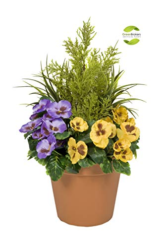 Greenbrokers Limited Fioriera Artificiale (60 cm) con Viole Gialle e Viola e conifero/Cedro topiaria in Vaso Color Terracotta