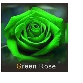 les colis noirs lcn 20 graines de Rose rosiers Couleur Vert
