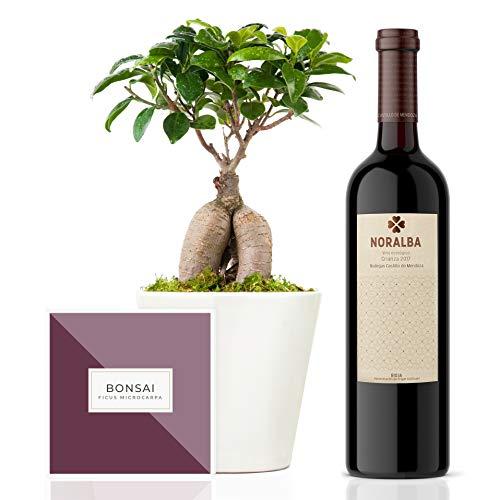 Set Regalo Lilac con bonsai ficus microcarpa ginseng natural 27 cm en maceta artesanal de 16 cm diámetro, guía de cuidados y vino tinto ecológico en caja regalo