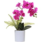 Olrla Red Artificial Orchid in Pot, Faux Phalaenopsis Flower in Vase Bonsai for Wedding Party Garden Home Decor (Purple Red 2)