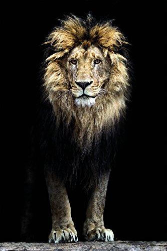 Bönninghoff Keilrahmen 60x90cm   Löwe Gesicht Afrika Mähne   Kunstdruck gespannt auf Keilrahmen   Motiv 609951