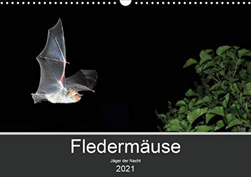 Fledermäuse - Jäger der Nacht (Wandkalender 2021 DIN A3 quer)